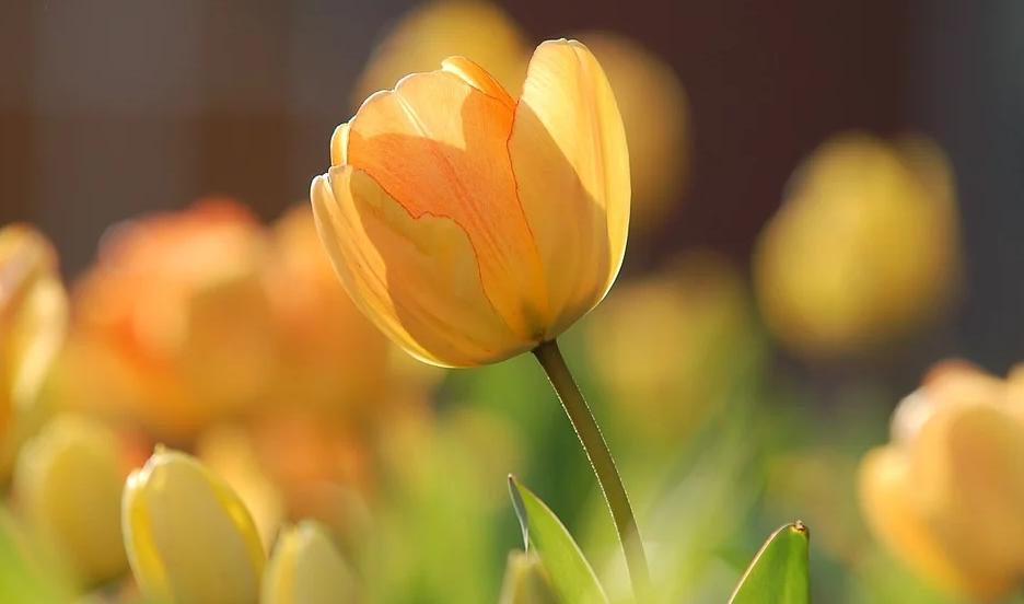 Wunderschöne Pflanzen für den Vorgarten